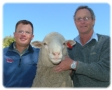 First Poll Merino Sale picture