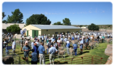 Sell most rams in SA