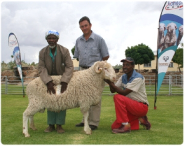 Andries knows his Merino's