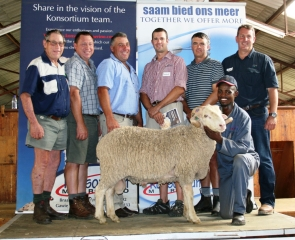 Better SA record at 32nd sale picture