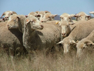 Invest in ewe units picture